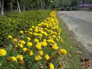 CMUCC flowers