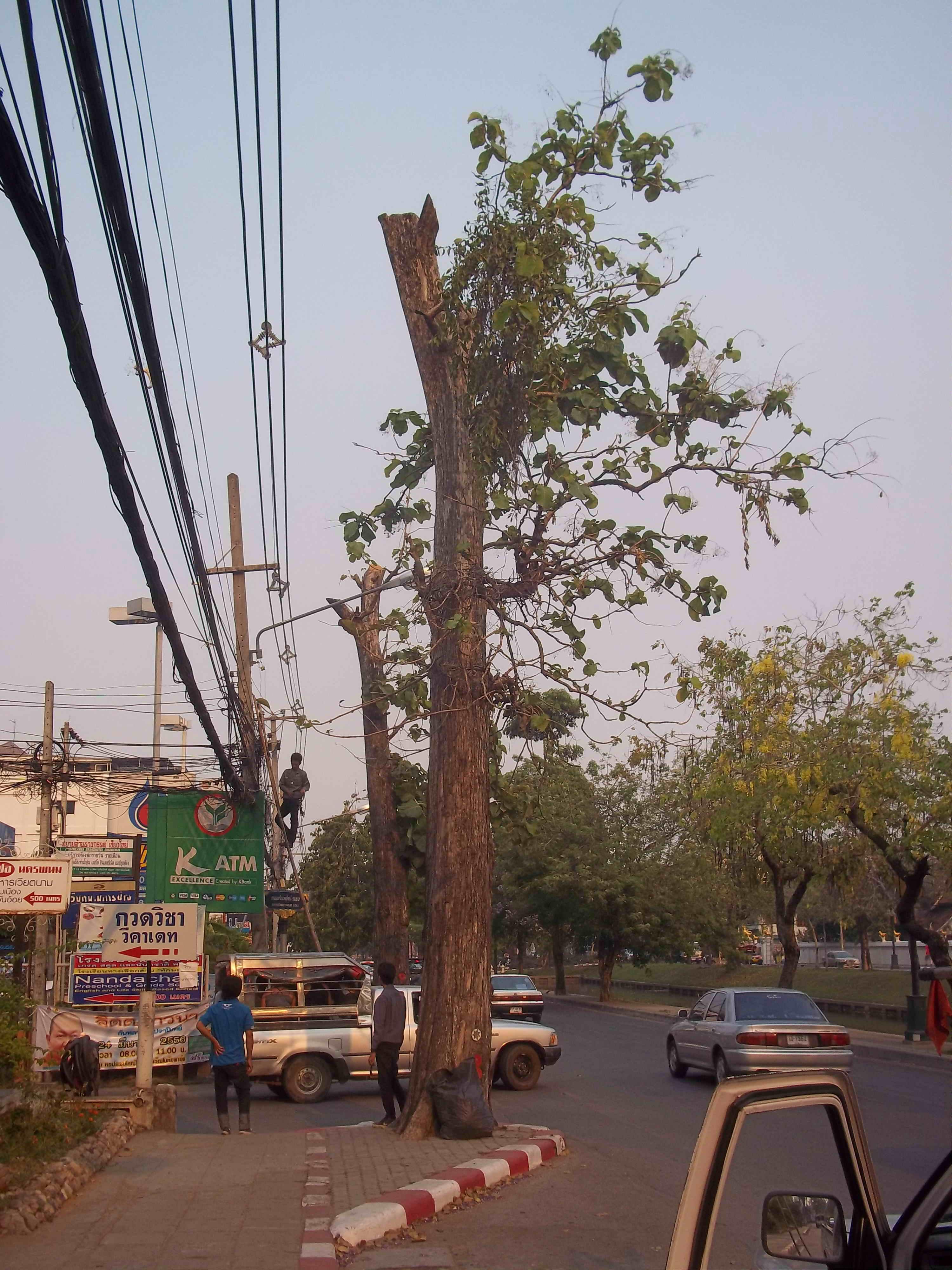 MOat Tree Beheading 01
