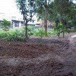 Kanchana Pisek Park - trees spared by the bulldozer