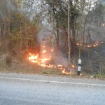 Sri Nan National Park on fire - roadside
