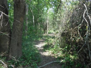 Mae Hia Nai Walking Trail
