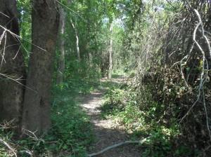 Mae Hia Nai Walking Trail