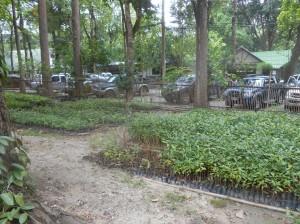 Huai Keow Tree Nursery