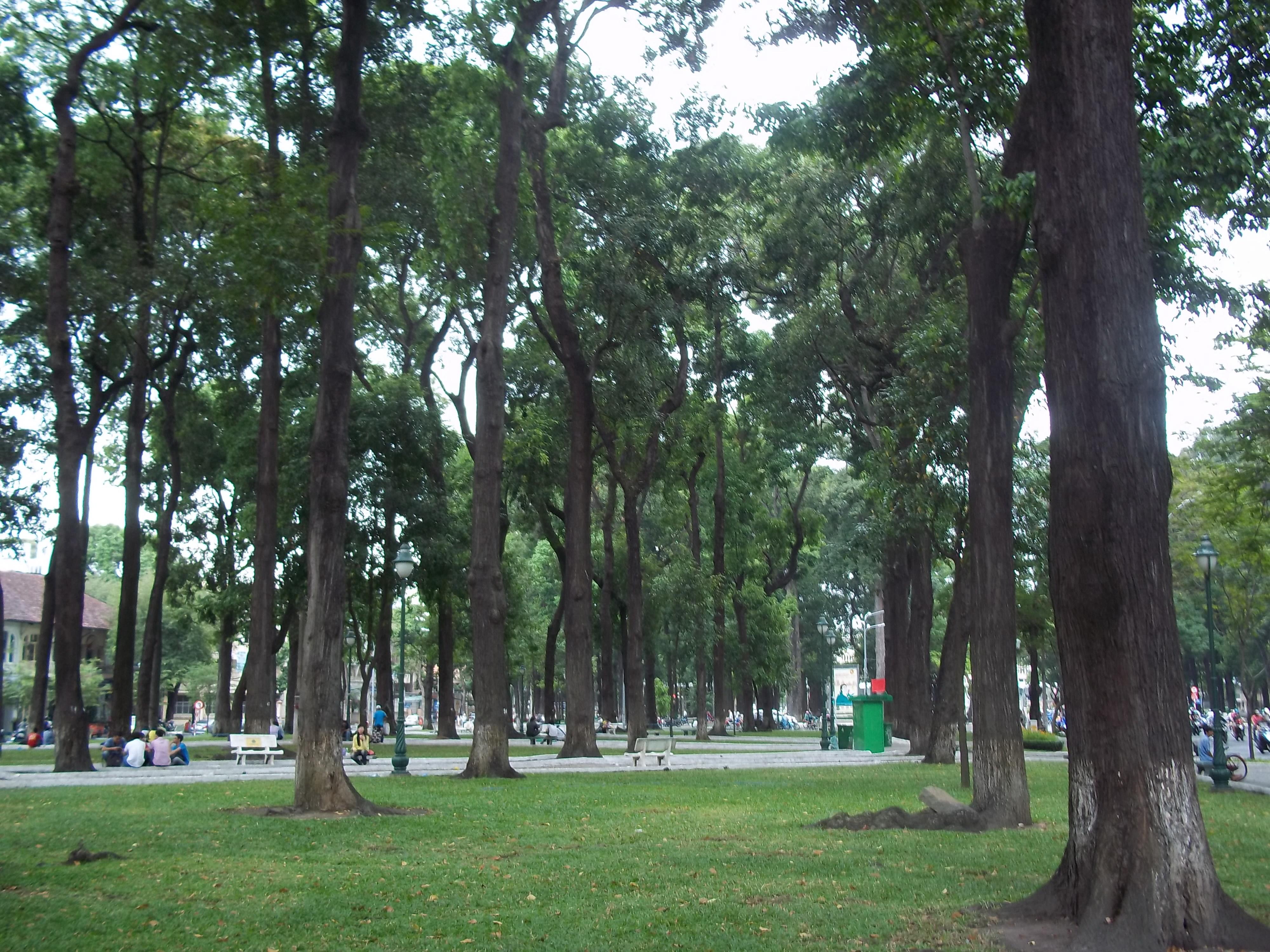 Park in Ho Chi Minh - Hopea odorata
