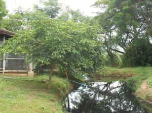 DSCN3054
