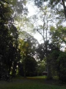 Mae Hia Nai Forest
