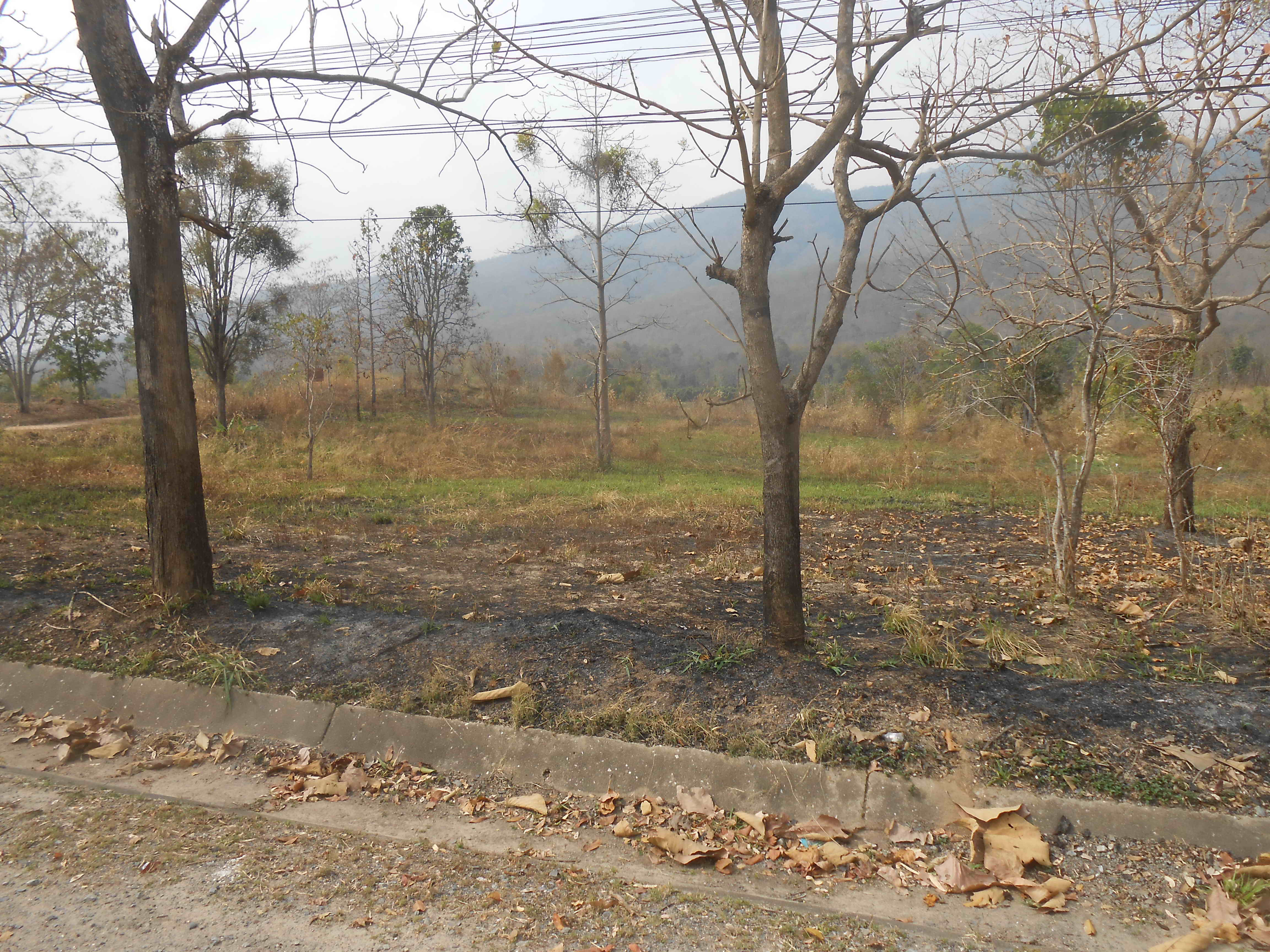 Army Land Mae Rim Burnt Greening