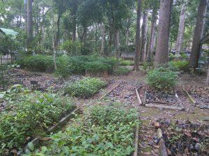 The seedlings beneath YangNa trees.