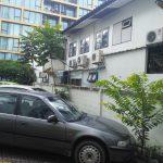 Car Park Saplings 2