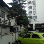 Car Park Saplings 1