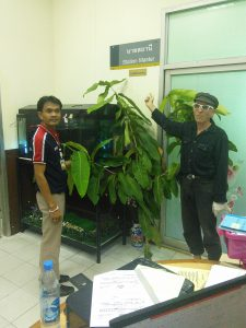 Chiang Mai RS office.
