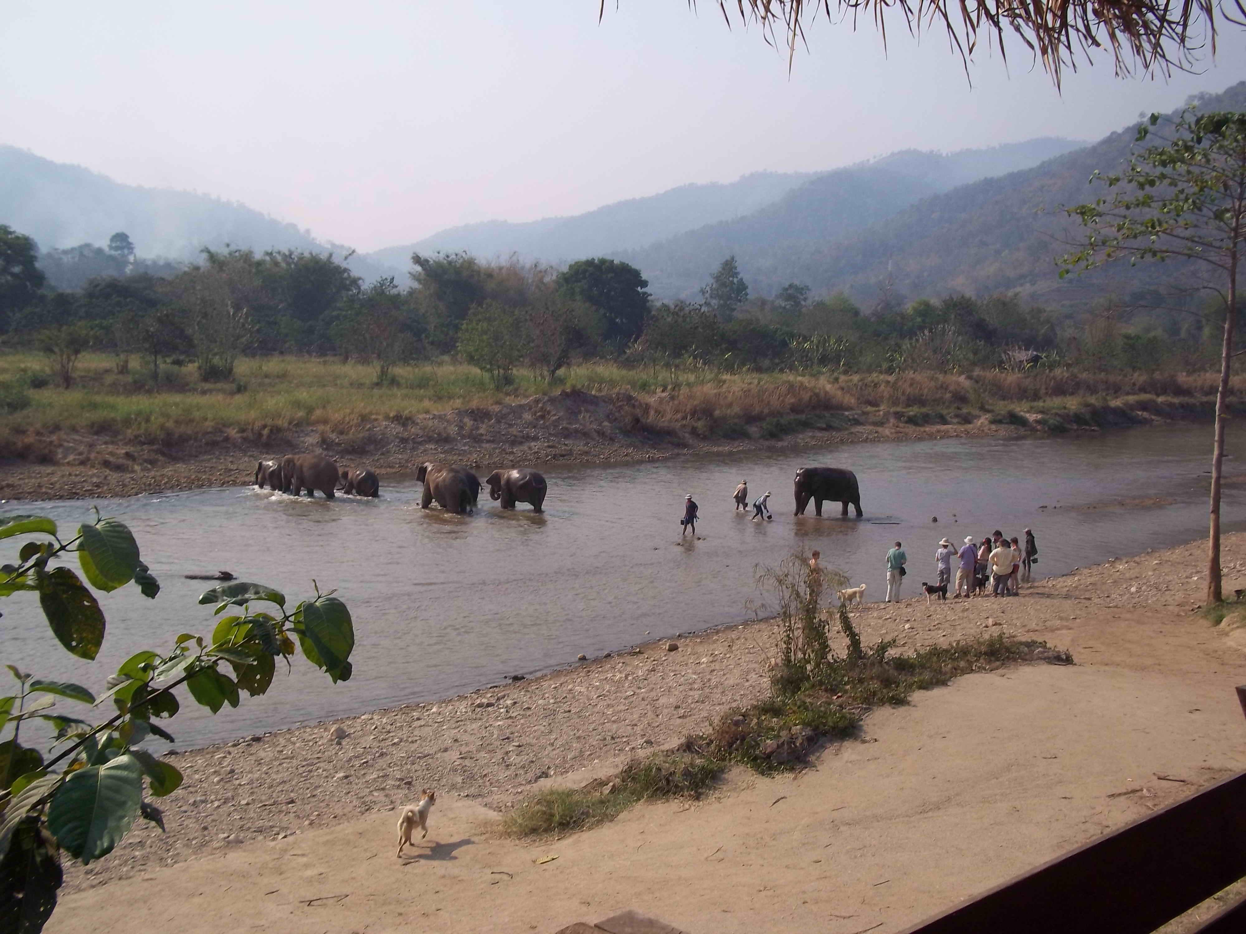 """Elephants under Siege – """"Monkey Cheeks"""" Destroyed"""